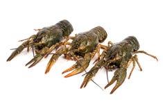 Three crayfish Stock Photo