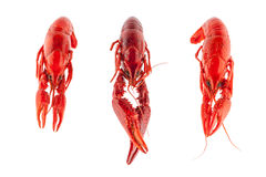 Three crayfish Royalty Free Stock Image