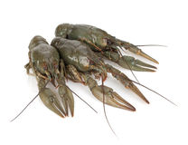 Three crayfishes Stock Images