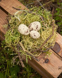 Three cream and brown eggs in a birds nest on a wooden crate Stock Image