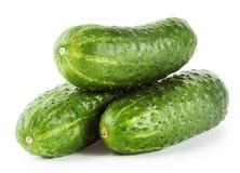 Three crispy fresh cucumbers Royalty Free Stock Image