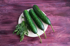 Three cucumbers and bunch of dill. Lying on a light plate Royalty Free Stock Images