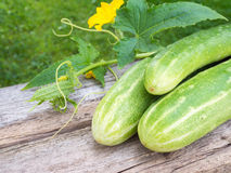 Three cucumbers and cucumber blossom on the gray wooden board Stock Images