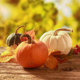 Three cucurbita squash and pumpkins Royalty Free Stock Images