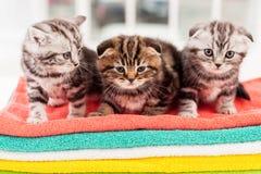 Three curious kittens. Stock Photo