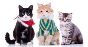 Three curious seated cats Stock Photos