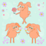 Three cute cartoon piglet stickers Happy and sad pigs with a flower in a hand. Three cute cartoon stickers. Happy pig with a flower in a hand. Sad piggy. Lovely Stock Images