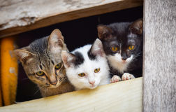 Three cute cats. Looking From the window royalty free stock photos