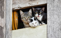 Three cute cats. Looking From the window stock photo