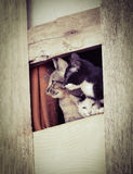Three cute cats. Looking From the window royalty free stock photography