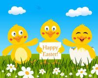 Three Cute Chicks Wishing Happy Easter Stock Photography