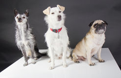 Three cute dogs Royalty Free Stock Photos