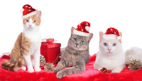 Three cute domestic cats with Santa hat Royalty Free Stock Photography