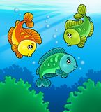 Three cute freshwater fishes Stock Photos