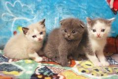 Three cute kitten gray,gray-white,beige Royalty Free Stock Photos