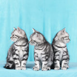 Three cute kitten Stock Photo