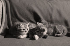 Three cute kittens Royalty Free Stock Photos