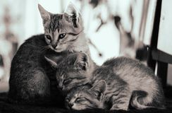 Three cute kittens Stock Photos