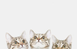 Three cute kittens are waiting to be fed. Cat faces looking up Royalty Free Stock Photos