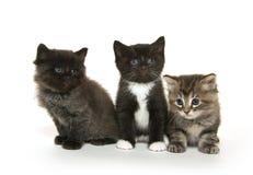 Three cute kittens on white Stock Photos