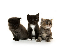 Three cute kittens on white Stock Image