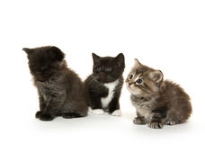 Three cute kittens on white Royalty Free Stock Photos