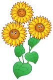 Three cute sunflowers Royalty Free Stock Photos