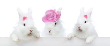 Three cute white rabbit - isolated Royalty Free Stock Photos
