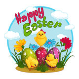 Three cute yellow chicken near Easter eggs, decorated with a pattern. Greeting card with holiday. Funny character. Royalty Free Stock Photography
