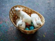 Three cuties Royalty Free Stock Photos