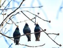Three cuties singing Stock Photos