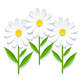 Three 3d chamomile  on white background Royalty Free Stock Photo