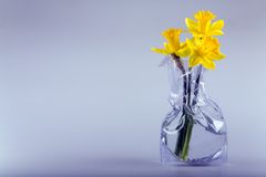 Three daffodils. Three daffodil flowers in the modern vase with water. Lots of space for text Royalty Free Stock Images