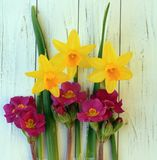 Three daffodils yellow with leaves and small purple flowers Stock Images