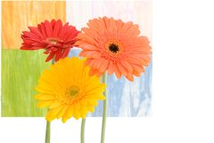Three Daises On Colorful Background Stock Image