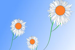 Three daisies Royalty Free Stock Photography