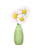 Three Daisies in a Green Vase Royalty Free Stock Image