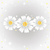 Three daisy flowers. Royalty Free Stock Photo