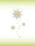 Three daisy flowers. Royalty Free Stock Image