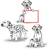 Three Dalmatians. Three vector puppies Dalmatian with signboard to write text Royalty Free Stock Photography