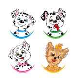 Three Dalmatians and one Yorkshire Terrier. Stock Image