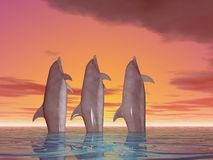 Three dancing Dolphins Royalty Free Stock Photography