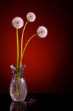 Three dandelion blowballs red Royalty Free Stock Image