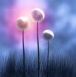 Three Dandelions. A colorful representation of several Dandelion flowers.  (High-resolution computer render Royalty Free Stock Images
