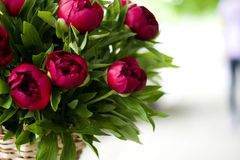 Flowers Bouquet Stock Images Download 603 949 Royalty Free Photos
