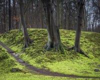 Three dark wet trees on bright green moss forest floor. Walking through the park stock photo