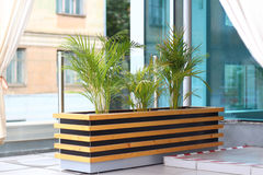 Three date palms on summer terrace Stock Photo