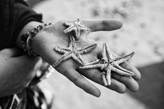 Three dead starfish palm Royalty Free Stock Image