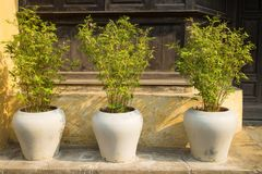 Three decorative bamboo tree pots in front of old house.  Royalty Free Stock Photo