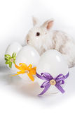 Three decorative eggs with bunny. A white bunny sitting behind three eastern eggs Royalty Free Stock Photos